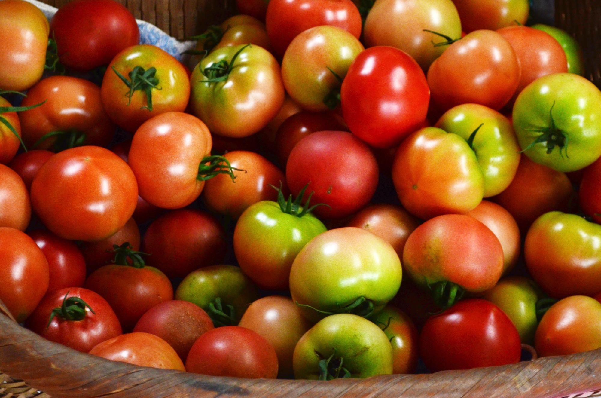小石原トマト